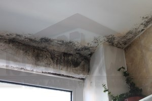 eliminazione muffe da casa soluzioni